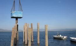 2010-operae-srl-infissione-pali-in-legno-per-pontili26